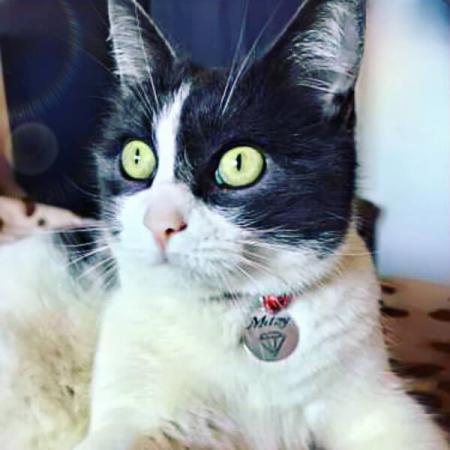 Medalion personalizat cu nume pentru pisicuta, id tag rotund pentru animale de companie, gravat pe banut din aluminiu [0]