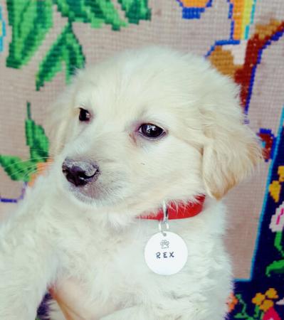 Medalion personalizat cu nume pentru pisicuta, id tag rotund pentru animale de companie, gravat pe banut din aluminiu [5]