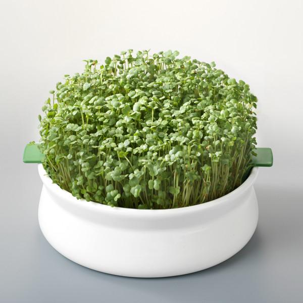 Vas pentru germinare seminte mucilaginoase [0]