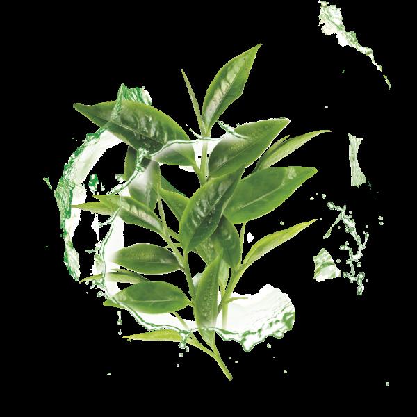 Set Black Friday 20x Masca Servetel Garnier Moisture+ cu ceai verde, pentru reimprospatare [2]
