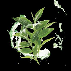 Set 10x Masca Servetel Garnier Moisture+ cu ceai verde, pentru reimprospatare [2]