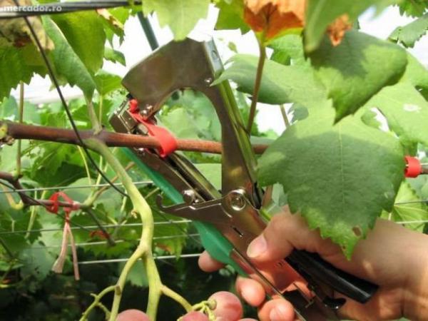 Aparat pentru legat vita de vie , legume si pomi fructiferi [1]