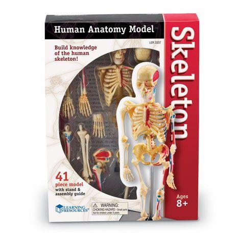 Corpul uman - Sistemul osos - 41 piese 0