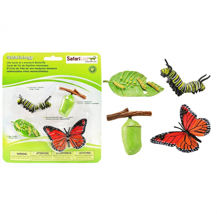 Ciclul de viata Fluturele Monarh - Set 4 figurine 4