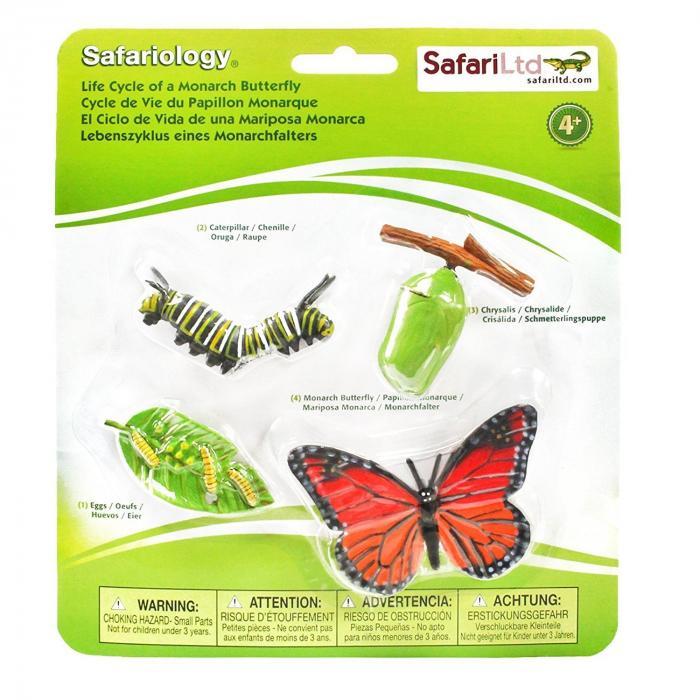 Ciclul de viata Fluturele Monarh - Set 4 figurine 5