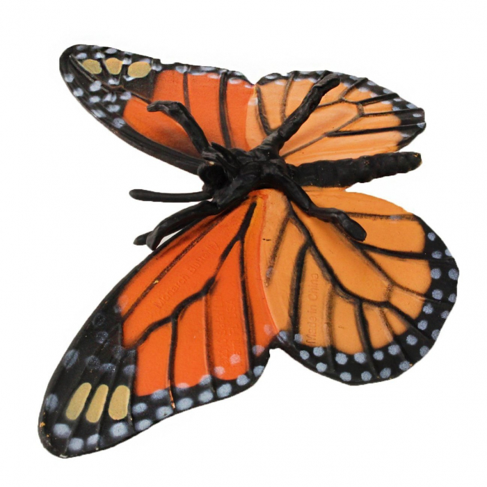 Ciclul de viata Fluturele Monarh - Set 4 figurine 6