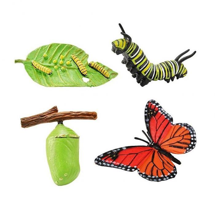 Ciclul de viata Fluturele Monarh - Set 4 figurine 0