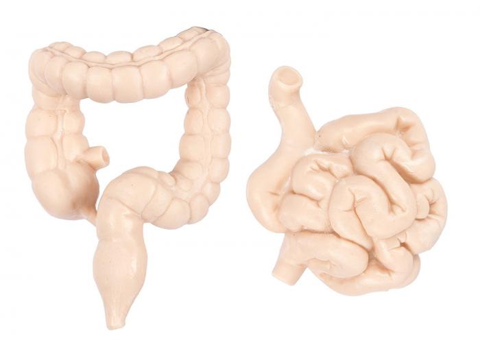 Organele corpului uman - set figurine 5