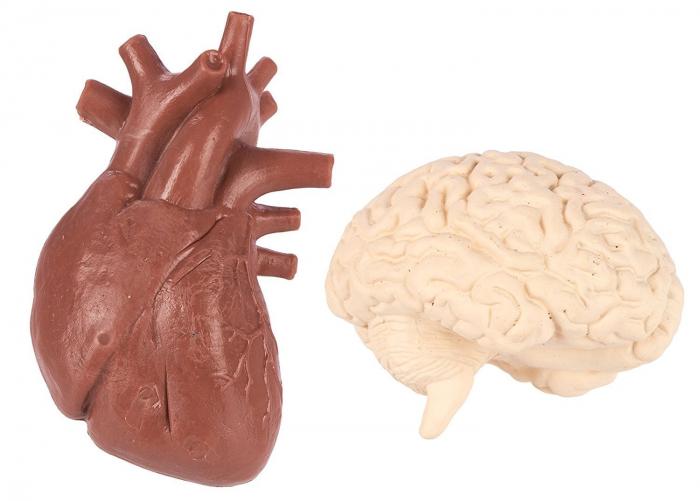 Organele corpului uman - set figurine 6