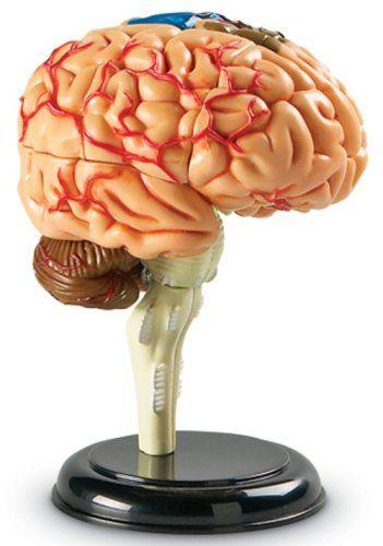 Corpul uman - Creierul - 31 piese - Set educativ 1