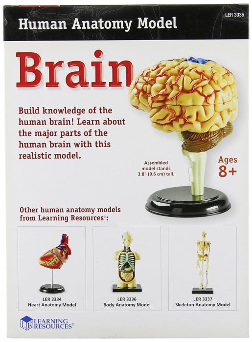 Corpul uman - Creierul - 31 piese - Set educativ 2