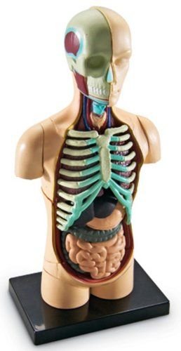 Corpul uman - Macheta cu 31 piese - Set educativ 3