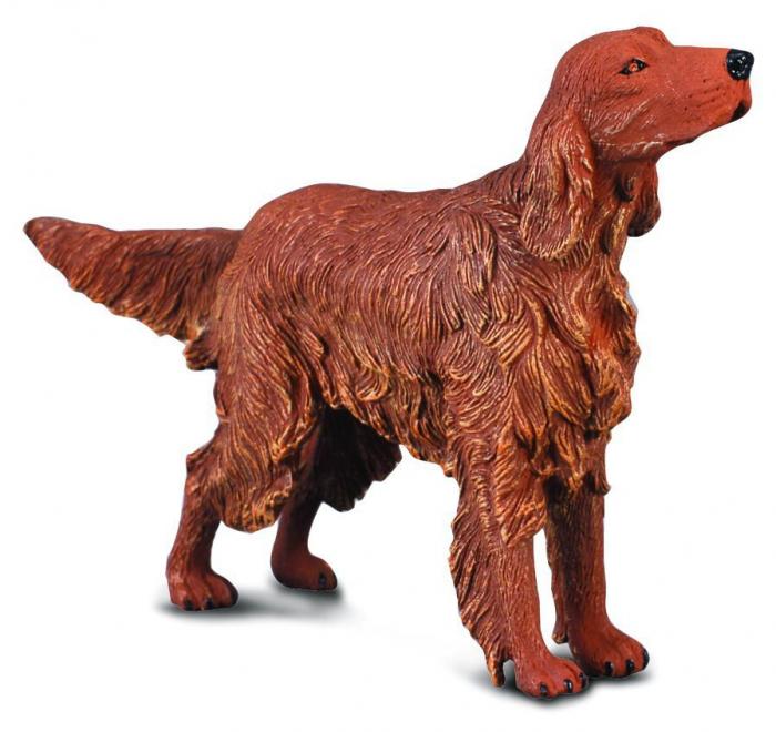 Setter irlandez roscat - Animal figurina 0