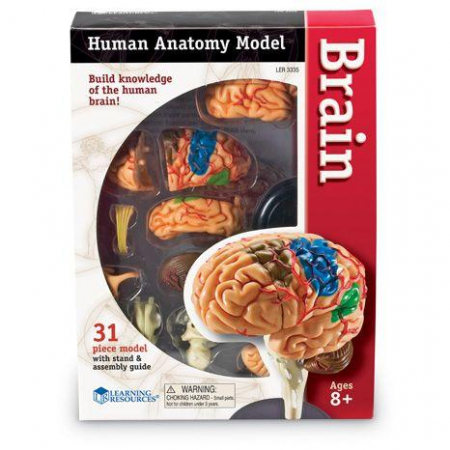 Corpul uman - Creierul - 31 piese - Set educativ0