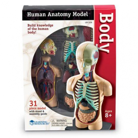 Corpul uman - Macheta cu 31 piese - Set educativ1