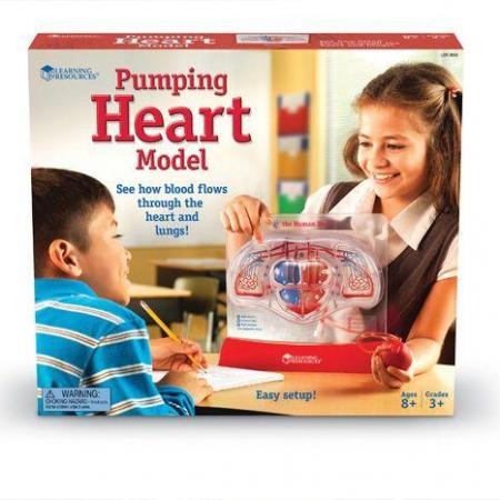 Set educativ copii - Cum functioneaza inima1