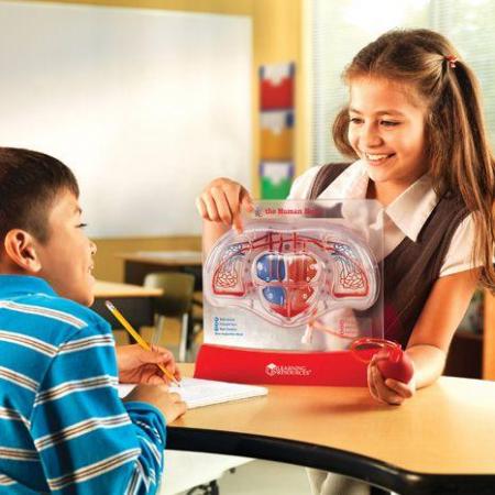 Set educativ copii - Cum functioneaza inima2