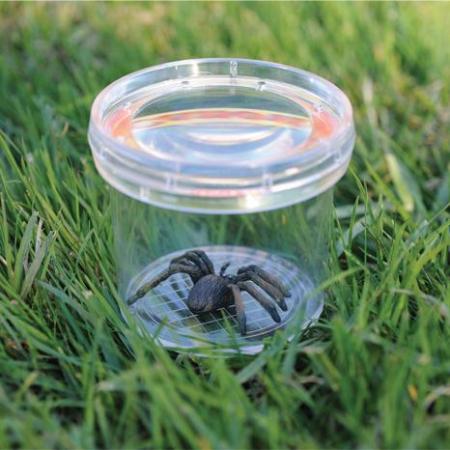 Borcan cu lupa pentru studiu insecte - GeoSafari1