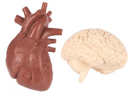 Organele corpului uman - set figurine6