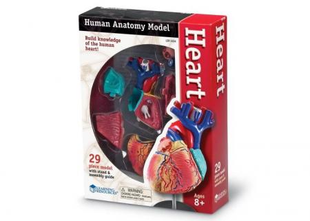 Corpul uman - Inima - Macheta cu 29 piese - Set educativ