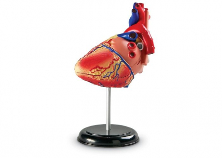 Corpul uman - Inima - Macheta cu 29 piese - Set educativ3