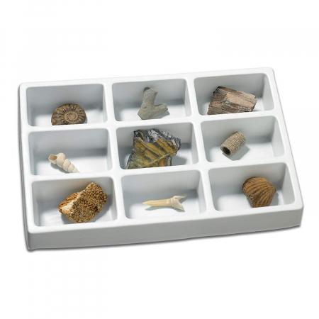 Kit paleontologie - Fosile