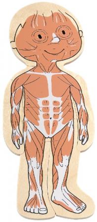 Puzzle stratificat Corpul tau Fetita [3]