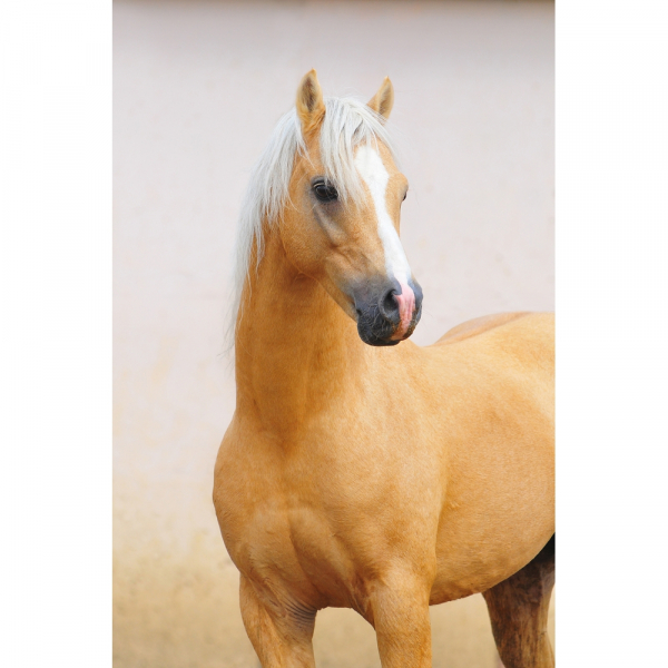 Proiector cai si ponei Brainstorm Toys E2022 [6]