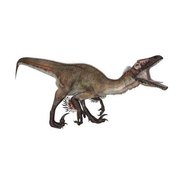 Proiector cu Dinozauri si Lampa de Veghe Brainstorm Toys E2046 2