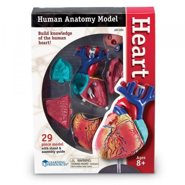 Sablon corp uman - Inima 3