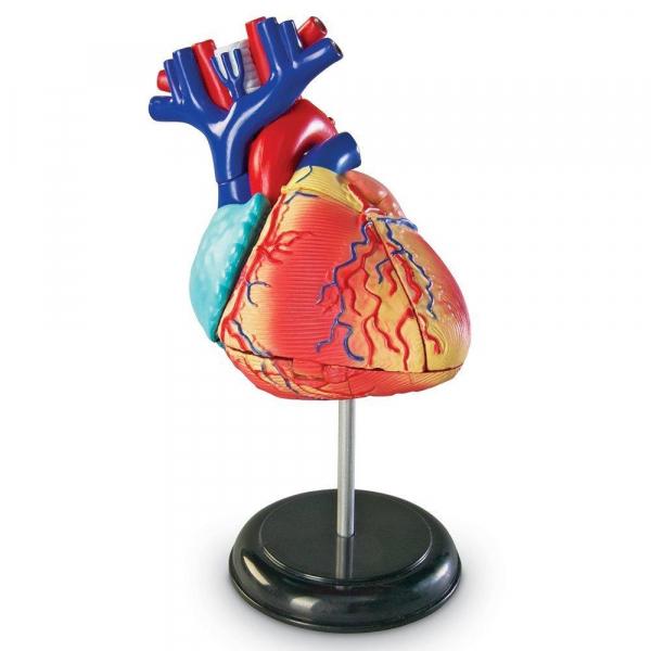 Sablon corp uman - Inima 0