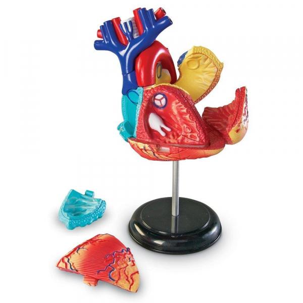 Sablon corp uman - Inima 1
