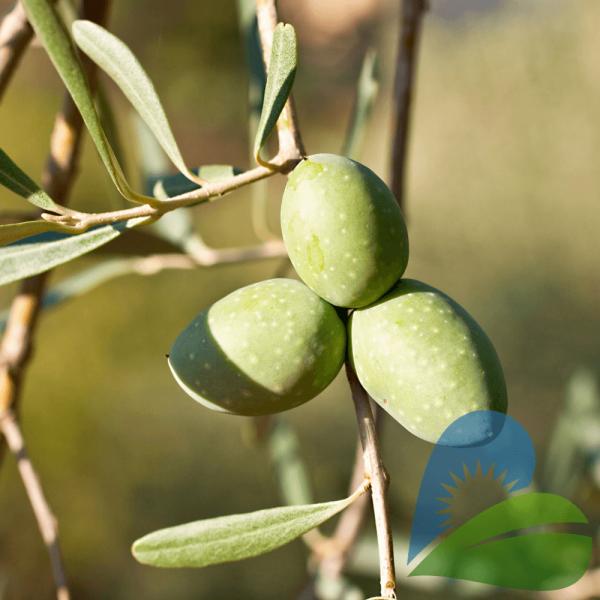 Masline Verzi cu Oregano si Lamaie, 500g Nera Plant 1