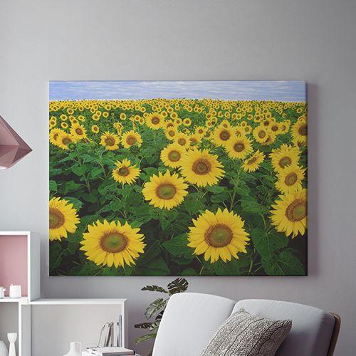 Tablou canvas - CAMP DE FLOAREA SOARELUI 0