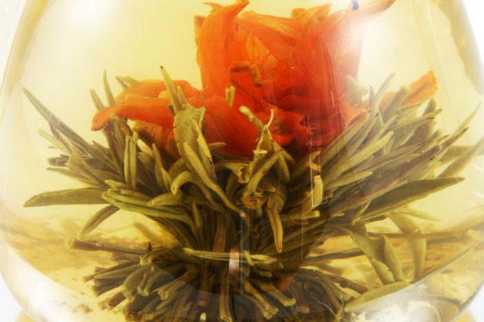 Ceainic Cup Aroma & 10 Ceaiuri Blooming 6