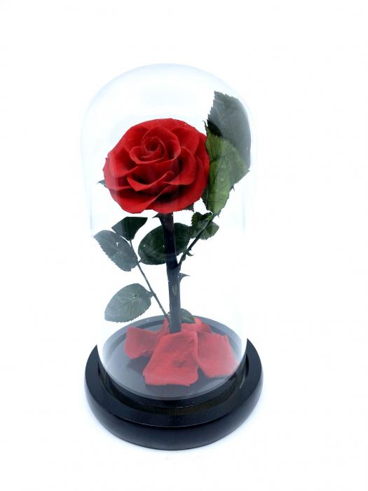 Cadou Valentine's Day Trandafir Rosu Criogenat Cupola 20 cm & Cercei Sapphire Heart [1]