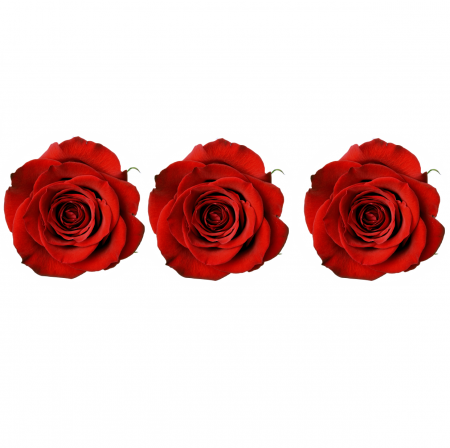 Set 3 Trandafiri Criogenati2