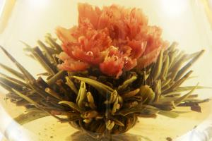 Ceainic Cup Aroma & 10 Ceaiuri Blooming7