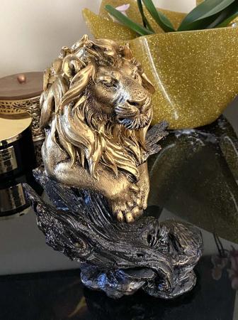Magnificent Lion King [3]