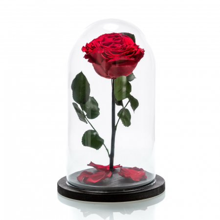 Cadou Valentine's Day Trandafir Rosu Criogenat Cupola 20 cm & Cercei Sapphire Heart [3]