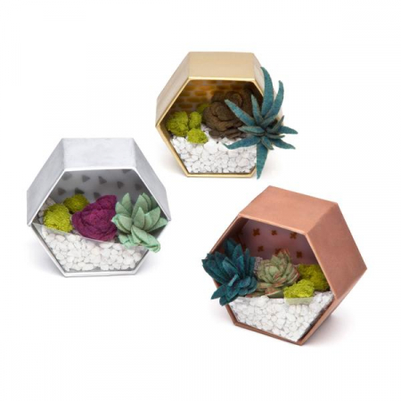 Set creativ - Mini Terrariums Kit2
