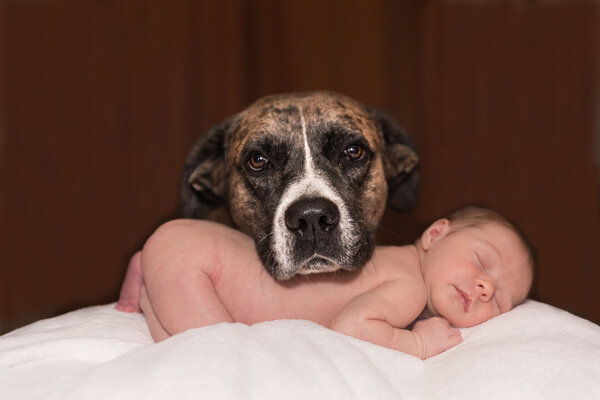 Bebelusi si animale de companie – la ce trebuie sa fie atenti parintii?