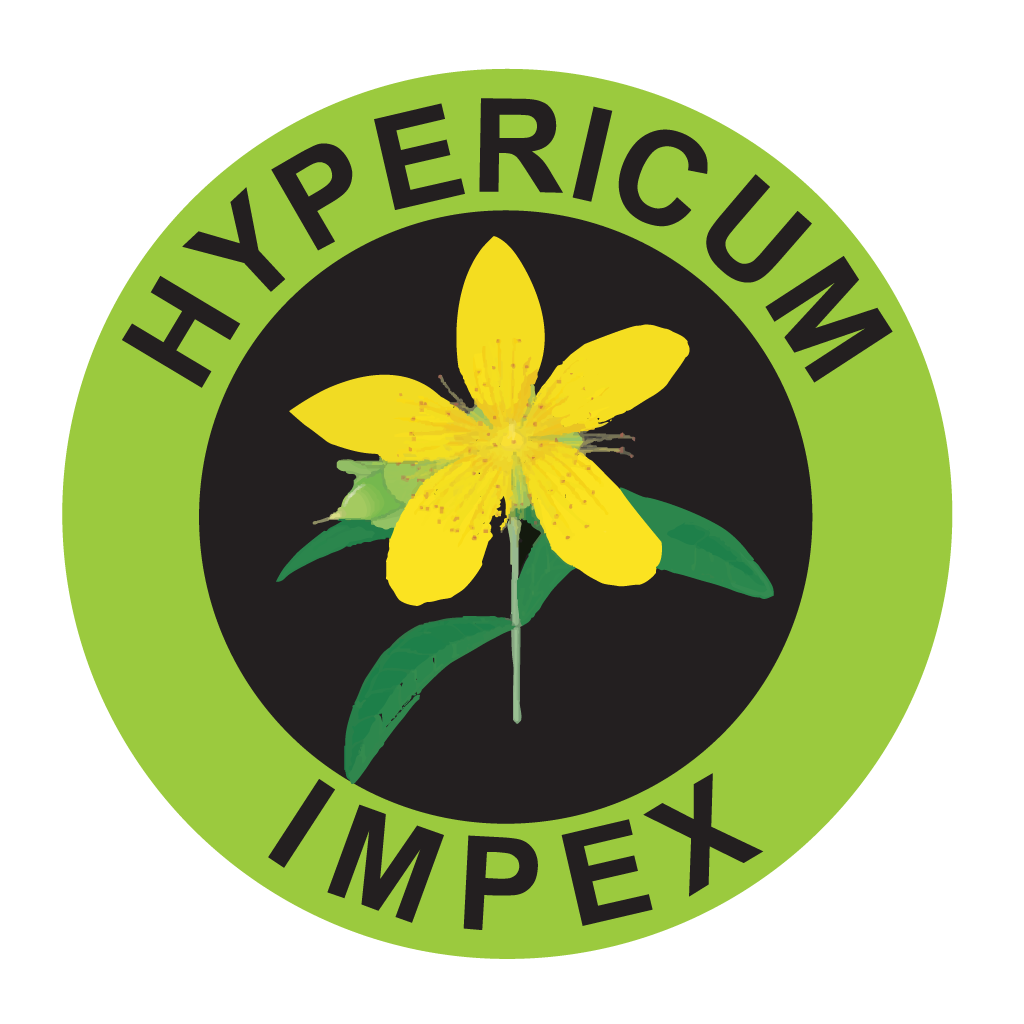 Hypericum Plant