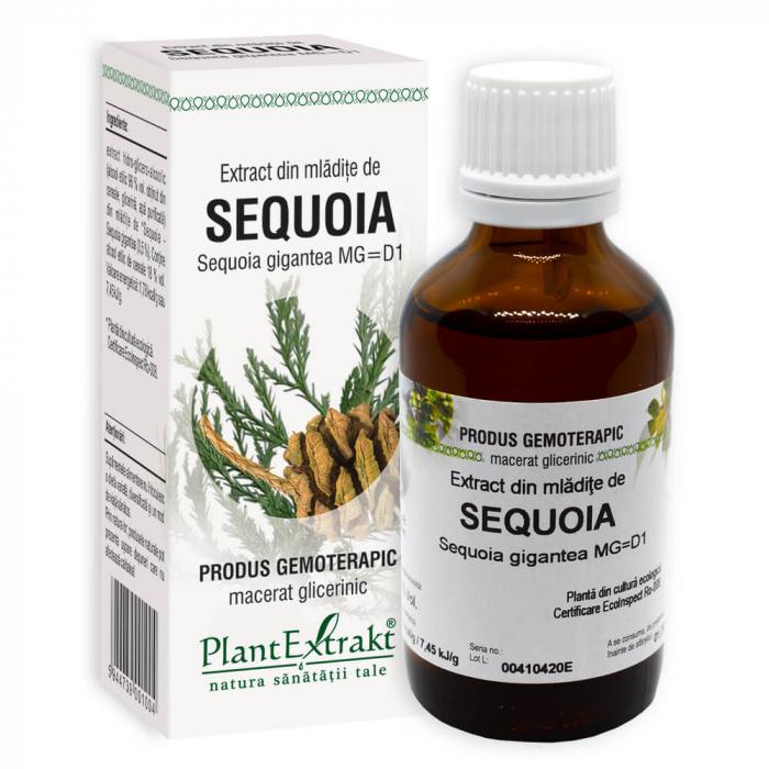 Extract din mladite de SEQUOIA ( Sequoia gig MG=D1) 50ml Plant Extrakt 0