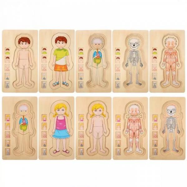 Jucarie educativa puzzle multistrat-partile corpului uman -baiat . 3