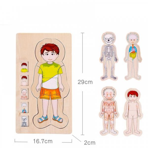 Jucarie educativa puzzle multistrat-partile corpului uman -baiat . 1