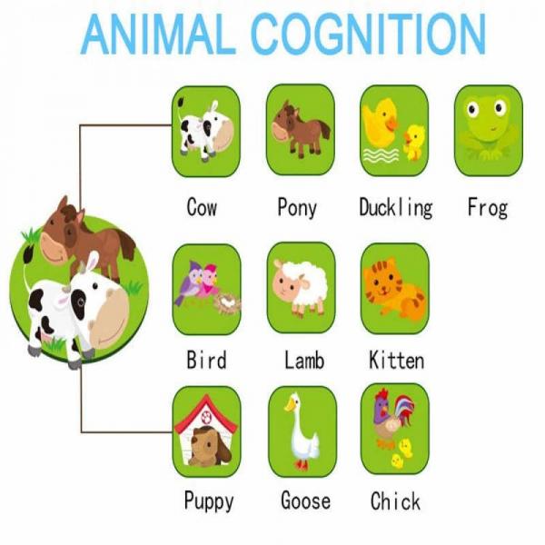 Jucarie interactiva Tableta cu animalute de la ferma 6