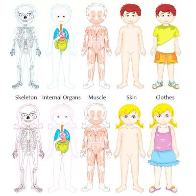 Jucarie educativa puzzle  multistrat anatomie-partile corpului uman-fata . [2]