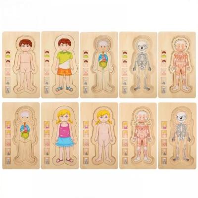 Jucarie educativa puzzle multistrat-partile corpului uman -baiat .3