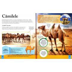 Animalele-Enciclopedia vizuala a copiilor [1]